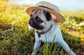Pug Dog Sitting By River Wearing Hat. Happy Puppy Waiting A Command Of Master. Dog Chilling Outdoors poster