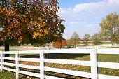 Horse Farm Pastures