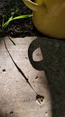 Geometric Shadows From Blade Of Grass And Round Handle Of Cooking Pot. Shadow Figures On Rough Cemen poster