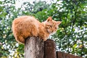 Looking Up At Ginger Cat Sitting On Wooden Pole On Blurred Background poster