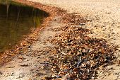 Autumn Brown Leaves Beside Water. Fallen Bright Leaves On The Water Surface. poster