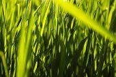 Fresh Dark Green Grass Background.nature Background With  Fresh Green Grass With Beautiful Bokeh Eff poster