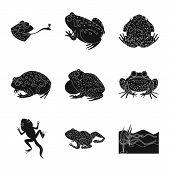Bitmap Design Of Fauna And Reptile Logo. Set Of Fauna And Anuran Stock Symbol For Web. poster