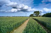 Green Wheat Field. Field Road In The Wheat Field. Saturated Blue Sky With Cumulus Clouds poster