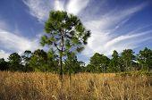 Scenic Florida Landscape