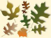 Autum Leaves Background