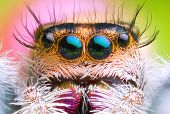 Front View Of Extreme Magnified Jumping Spider Head And Eyes With Green Leaf Background poster
