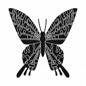 Vector Illustration Of Butterfly And Zoology Symbol. Collection Of Butterfly And Wildlife Stock Symb poster