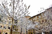 Snowy Trees In Rome (italy).
