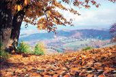 Scenic Autumn Mountain Landscape With Brown Yellow Leaves Lying On The Ground. Beautiful Scenery. So poster