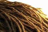 stock photo of rastaman  - detail of some dreadlocks warm illuminated in white back - JPG