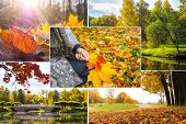 Collage With Bright Views Of Autumn. Autumn Landscape Collage. poster