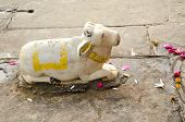 Sacred Cow Marble Statue In Varanasi Temple
