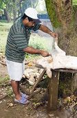 Editorial Man Butchering Hog Pig Nicaragua