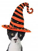 stock photo of witches  - Cross eyed kitten wearing a Halloween witch hat - JPG