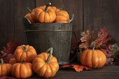 stock photo of gourds  - Tiny pumpkins in wooden bucket on table - JPG