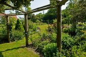 image of pergola  - Wooden pergola gazebo in a beautiful blooming garden full of flowers and green plants - JPG