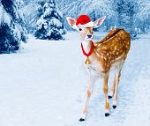 stock photo of deer  - Christmas white - JPG