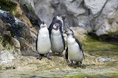 Pinguin In The Zoo