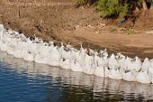 foto of sandbag  - Row of large industrial sandbags holding back a river and protecting against flooding - JPG