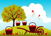 image of hand-barrow  - vector baskets of apples and hand barrow in apple orchard - JPG