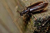 Black beetle on wood plank