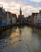 Swans On Canals Of Bruges, Belgium