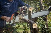 picture of man chainsaw  - man without the necessary protection cuts tree with chainsaw - JPG