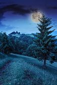 stock photo of moon-flower  - forest glade with flowers in the cool shade of the trees a hot summer night in moon light - JPG