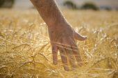 Hand on crop