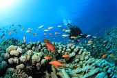 Scuba Diving on a coral reef with fish