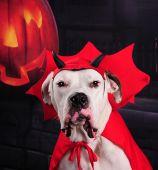 I'm not a devil dog!