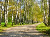 Autumn Preshpect, Yasnaya Polyana, Tula, Russia
