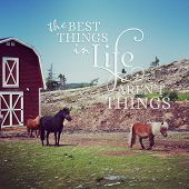 Instagram Of Miniature Ponies With Inspirational Quote