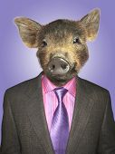 pic of piglet  - Piglet dressed business man - JPG