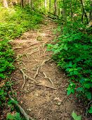 Sheltowee Trace trail in Red River Gorge, Kentucky. Daniel Boone National Forest