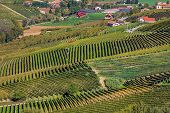 Green vineyards on the hills and small village on background in Piedmont, Northern Italy.