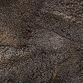 Sheep Fur Texture, Mouton (manufactured Sheepskin) Background