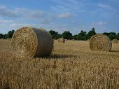 Harvested Hay