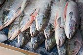 Fresh Sockeye Salmon