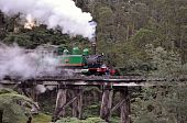 image of trestle bridge  - Puffing Billy steam train on the Trestle Bridge - JPG