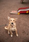Yellow Dog Collar Sitting On Playground