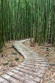 Hiking Through The Bamboo Forest