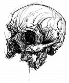 pic of dead-line  - Skull traditional drawing line work vector for Use - JPG