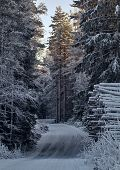 Wintry Forest Road
