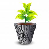 Business Plant Grow In Gray Pot
