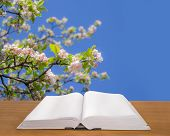 Open book on wood at spring background