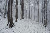 Winter wonderland in forest with white snow