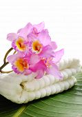Branch pink orchid with towel on banana leaf