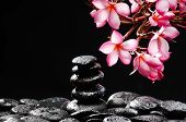Still life with branch of frangipani with stacked black wet stones